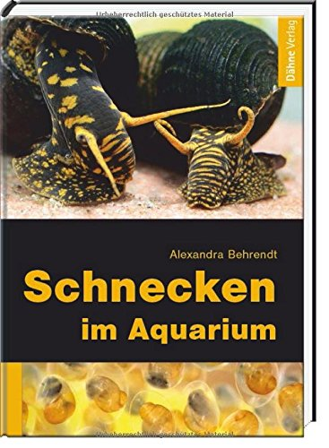 schnecken-im-aquarium