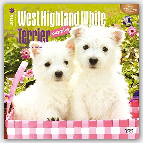 West High White Terrier Puppy 2016 Wall