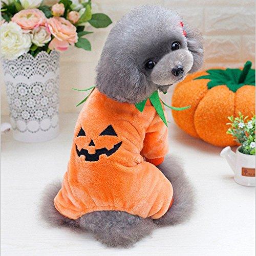 Halloween Kürbis mit warm Sweatshirt Haustier Hund (Kostüm Panther Pink Hund)