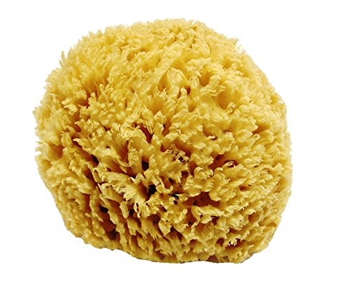 unbleached-honeycomb-natural-sea-sponge-strong-and-durable-suitable-for-both-children-and-adults-for