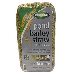 Blagdon Medium Barley Straw Bale