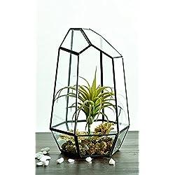 Durchsichtiges Pflanzengefäß von GZQ aus Glas, geometrisches Terrarium mit vielen Flächen, zum Aufstellen auf dem Schreibtisch oder im Freien, für Sukkulenten, Moosfarn und Luftpflanzen geeignet, dekoratives Geschenk