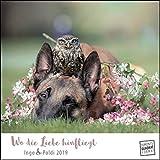 Wo die Liebe hinfliegt 2019 – Schäferhund Ingo & Steinkauz Poldi – Wandkalender mit Spiralbindung – DuMont Quadratformat 24 x 24 cm: Ingo & Poldi