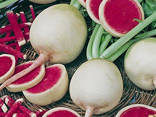 Radieschen - Radies - Winterradieschen - Wassermelone (100 Samen)