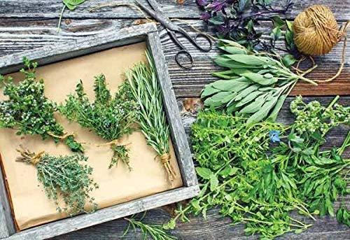 PLAT FIRM GRAINES DE GERMINATION: Bulk Organic Herbs 17 packs coriandre, basilic, persil, aneth et plus de plus de 2300 graines!
