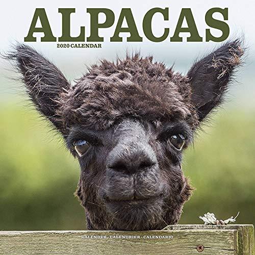 Unterbett Lama Alpaka gesteppt 100x200cm Matratzenauflage Bettauflage