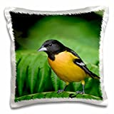 Danita Delimont - Birds - Baltimore Oriole bird on Tree fern, Costa Rica - NA02 RNU0004 - Rolf...