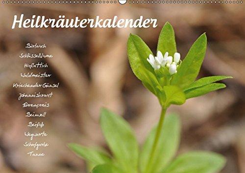 HeilkräuterkalenderAT-Version (Wandkalender 2019 DIN A2 quer): Pflanzenportraits zu allen...