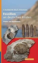 Fossilien an deutschen Küsten: Finden und Bestimmen