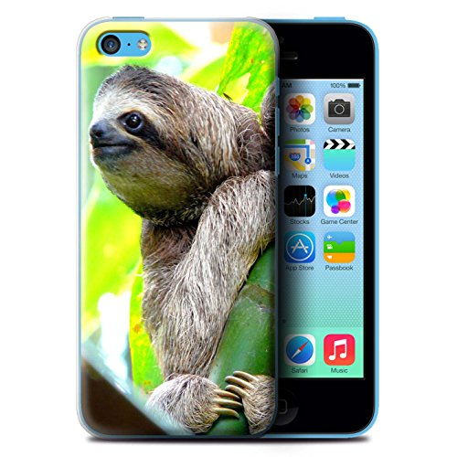 Coque de Stuff4 / Coque pour Apple iPhone 5C / Panda Design / Animaux Sauvages Collection Bradype