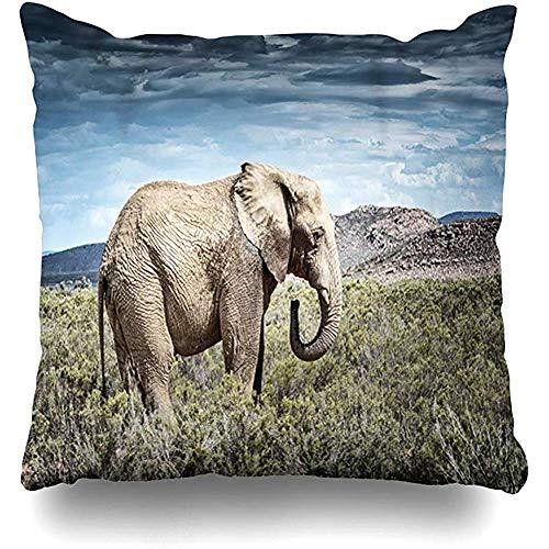 oningw Funda de cojín Safari Elefante Africano Sudáfrica Elefante Bush Loxodonta Africana Diseño Funda de Almohada para el hogar Tamaño Cuadrado es Funda de Almohada con Cremallera 45X45CM