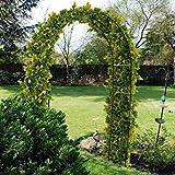 2.4M en acier pour Jardin Arche pour grimpant plants. trellis. extérieur voie feature. ROSES