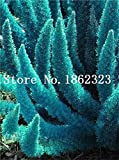 50 Pz Giardino Coda di volpe Fern Rare Creeper Vines Erba Mixed Foliage Seeds Esotico Seed Per Flower S Seed Ers: 23