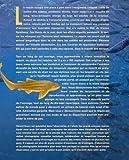 Image de Requins en liberté