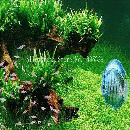 FARMERLY Samen Paket: Seedss Aquarium Aquarium Dekoration s Samen Seedss Samen 100seeds / bag: mix (Fish Tank Dekorationen Billig)