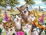 Cat selfie placa metálica para la pared placa regalo gatos Póster de imagen 15x 20cm Ginger, Negro y Blanco, Tabby