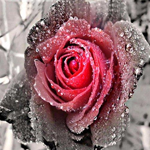 Riou DIY 5D Diamant Painting voll,Stickerei Malerei Crystal Strass Stickerei Bilder Kunst Handwerk für Home Wand Decor gemälde Kreuzstich Blumen-Serie Rose Blume Bild Muster (Mehrfarbig, 30 * 30cm) -