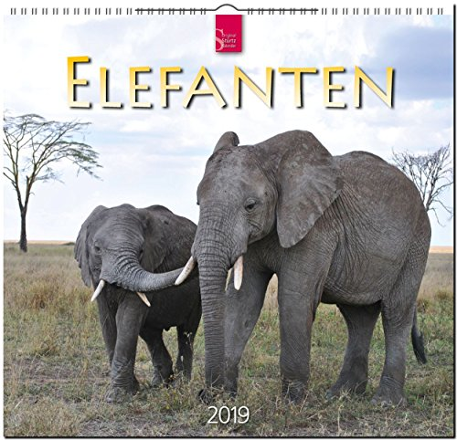 Elefanten 2019: Mittelformat-Kalender