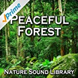 Daytime Pause in a Peaceful Forest for Quiet Contemplation and Emotional Healing