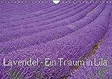 Lavendel - Ein Traum in Lila (Wandkalender 2016 DIN A4 quer): Genießen Sie ein ganzes Jahr blühenden Lavendel und erfreuen Sie sich an der intensiven ... (Monatskalender, 14 Seiten) (CALVENDO Natur)