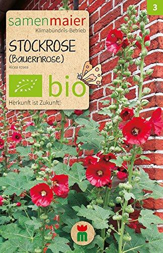 Samen Maier 854 Stockrose (Bauernrose) einfache dunkelrot (Bio-Stockrosensamen)