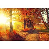 #9: Pitaara Box Autumnal Trees In Sun Rays Canvas Painting 6mm Thick MDF Frame 24 X 16Inch