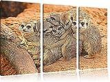 Erdmännchenfamilie in der Wildnis3-Teiler Leinwandbild 120x80 Bild auf Leinwand, XXL riesige Bilder fertig gerahmt mit Keilrahmen, Kunstdruck auf Wandbild mit Rahmen, gänstiger als Gemälde oder Ölbild, kein Poster oder Plakat