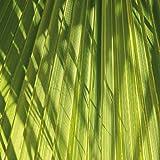 Tischsets Platzsets abwaschbar Palmblatt Quadrino von ARTIPICS 4er-Set Platzdeckchen Kunststoff 30x30 cm exotisch Sommer Licht und Schatten quadratisch praktisch für kleine Tische runde Tische