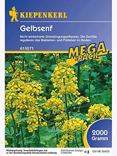 gelbsenf-grundunger-2kg