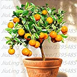 Pinkdose 20pcs / bag, Balkon Terrasse Bonsai Obstbäume gepflanzt Pflanze, Kumquat Pflanze, orange Pflanze, Mandarine