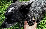 Hundescheren-Set mit Effilierschere zur Fellpflege für alle Hunde | Scheren aus Edelstahl mit abgerundeter Spitze - 5