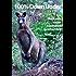 100% Down Under: Ein Rucksack voller Australiengeschichten