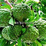 5 Pz graviola Soursop Guanabana Annona muricata tropicale delle sementi di imballaggio semi Garden Heirloom frutta