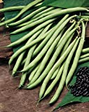 JustSeed - Vegetable - Climbing French Bean - Cobra - 40 Seed
