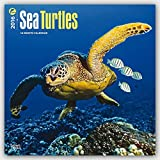 Sea Turtles 2016 Wall