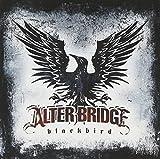 Songtexte von Alter Bridge - Blackbird