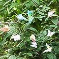Songmics 4M Solar LED Lichterkette Streifen Strip Solarleuchte mit 10 beleuchteten Schmetterlinge FSL601