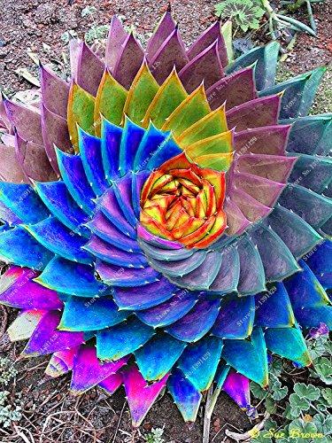 100 pcs fruits comestibles Aloe vera cosmétiques de beauté graines de plantes comestibles Graines Bonsai pour la maison et le jardin
