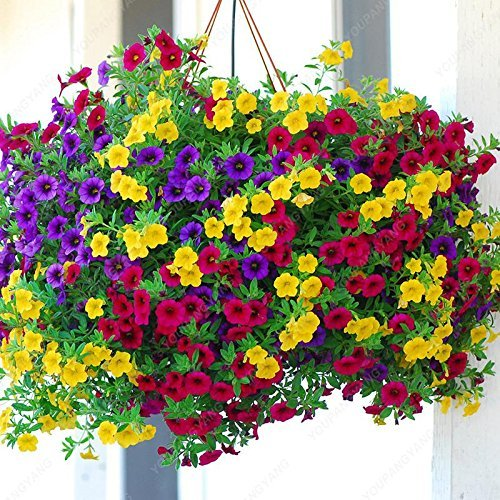 SwansGreen Green : Time-Limit 100 Seeds/Bag Petunia Seeds Multicolor  Petunia Hybrida Garden Home Bonsai Flower Morning Glory Seeds Green