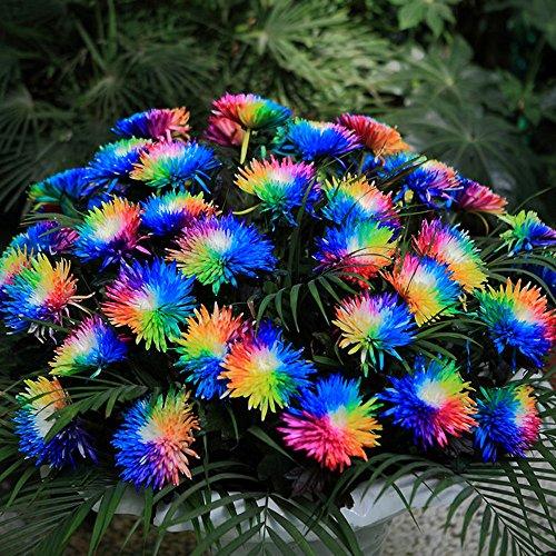 AGROBITS 100 RainbowSee, seltene Sonder einzigartige ungewöhnliche Bunte