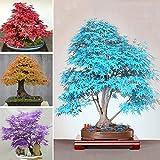 #3: 10 pcs Mixed Color Maple Bonsai Plant Seeds Home Garden Decor