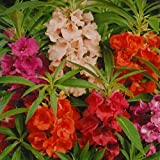 #8: Balsam Double Mixed Flower Desi Seeds Summer Variety Special for Home and Balcony Gardening ( Free) By Gate Garden