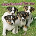 Jack Russell Terrier Puppies 2018 Wall Calendar
