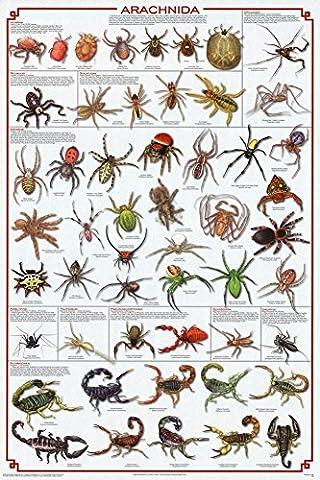 (24x 36) arachnida araignée poster tableau éducatif