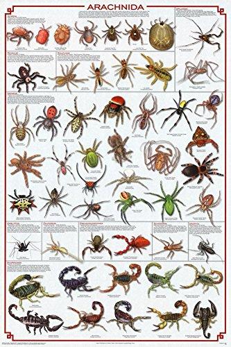 Spider Educational Wissenschaft Diagramm Poster (Christmas Spider Geschichte)