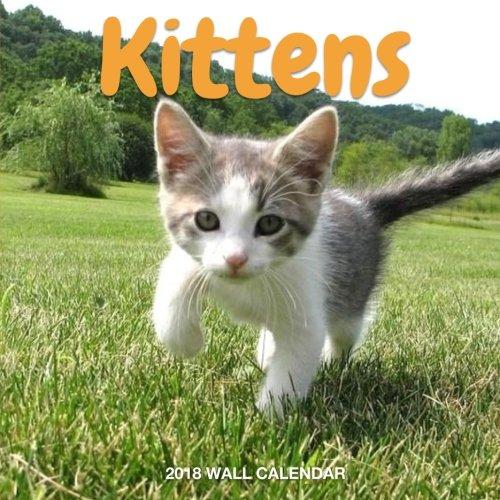 KITTENS 2018 Wall Calendar: Kitten Photos, 8.5 x 8.5, Mini Calendar, Wall Calendar