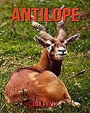 Antilope: Le livre des Informations Amusantes pour Enfant & Incroyables Photos d'Animaux Sauvages – Le Merveilleux Livre des Antilope pour enfants âgés de 3 à 7 ans