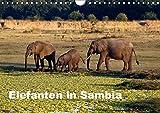 Elefanten in Sambia (Wandkalender 2019 DIN A4 quer): Die Elefanten im South Luangwa National Park können aus nächster Nähe beobachtet und fotografiert ... (Monatskalender, 14 Seiten ) (CALVENDO Tiere) - Johanna Krause