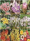 Super Agri Greenmixed Summer Flower Bulbs Pack Of 5 Bulbs By Super Agri Green, 1 Basil Seeds Free