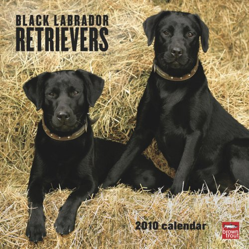 Black Labrador Retrievers 2010 -